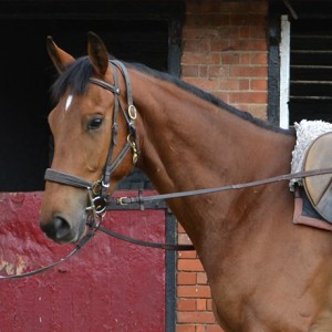 Bloody Nose - one of our horses in training