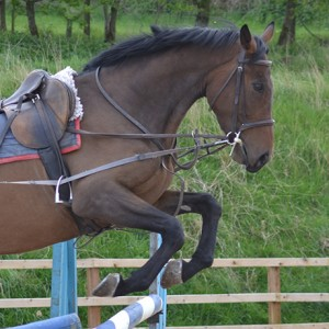 Cojack - another of the horses we train