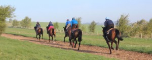 facilities gallops