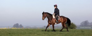 horse on the gallops