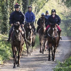 horses road riding