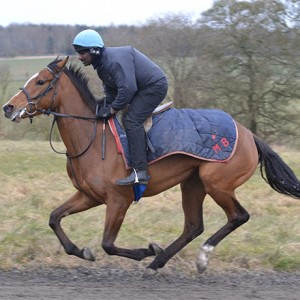 Ask Nellie in training on the gallops