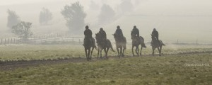 on the gallops partnerships header