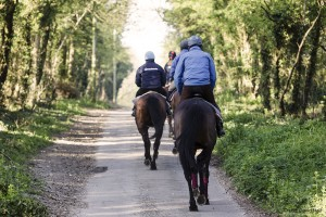 Road working horses