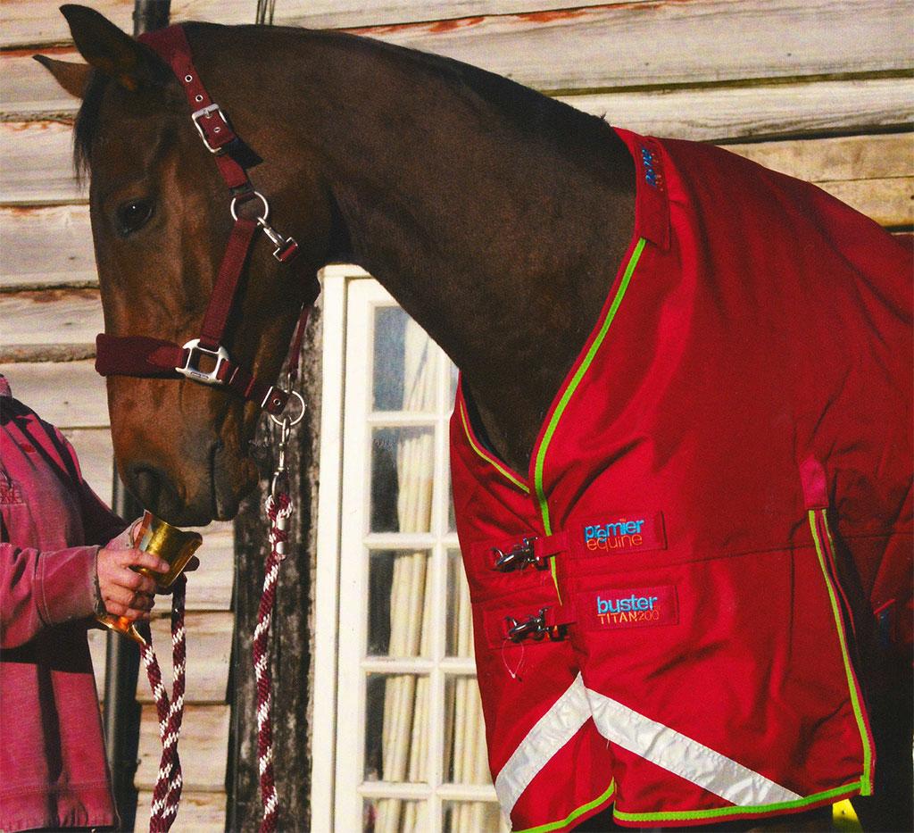 Coneygree wearing premier equine rug