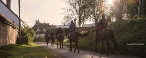 award winning horses